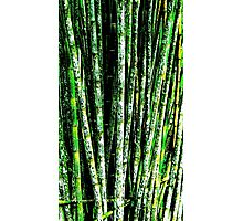 Bamboo Grove-Structured Photographic Print