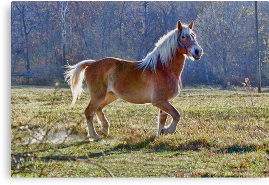 The Belgian Draft Horse by barnsis