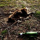 Dead Kangaroo with beer bottle by owuro