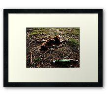 Dead Kangaroo with beer bottle Framed Print