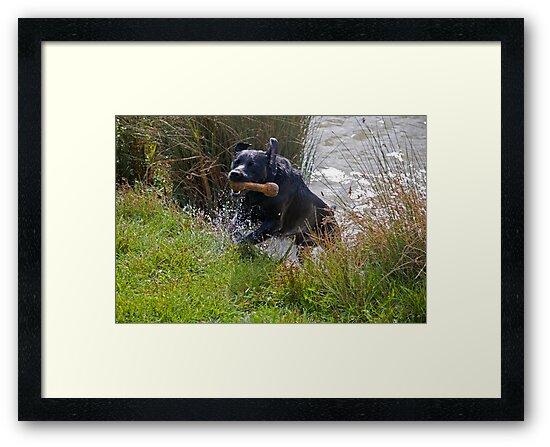 Action shot of casper swimming by Ian Salter