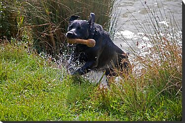 Action shot of casper swimming by Ian Salter