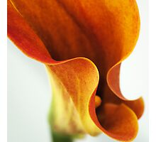 Lily Of Sorts Photographic Print