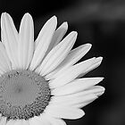 Daisy Sunshine (monochrome) by Scott Ruhs