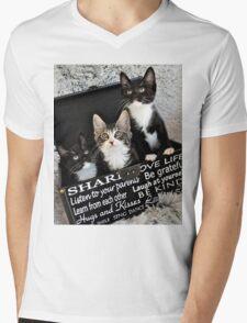 Kittens in a box T-Shirt