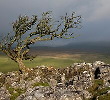 The Lichen Tree by SteveMG