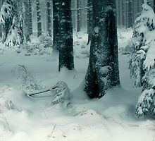 Winter forest 2 by intensivelight