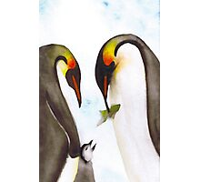 Penguin Family Photographic Print
