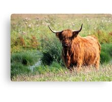 Fluffy Cow Canvas Print