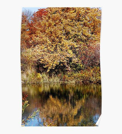 Autumn Trees Reflected Poster