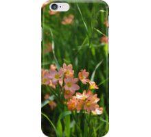 Wild Flowers in York (Cape Tulips) iPhone Case/Skin