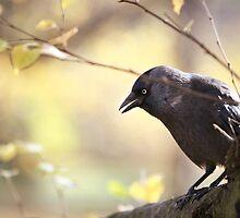 Bird sitting on a tree branch by Alexandru Vladoiu