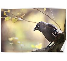 Bird sitting on a tree branch Poster