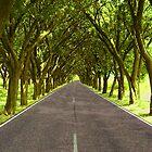 Highway A1 by Bonus