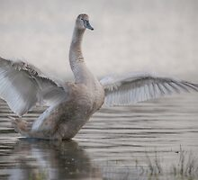 Spread Your Wings by Henri Ton