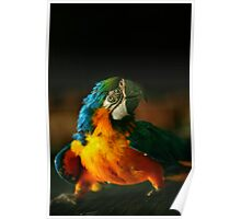 Big green-yellow-blue parrot Poster