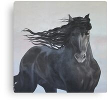 Friesian Horse Canvas Print