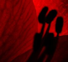 Amaryllis - Impressions #2 by Ronny Falkenstein