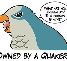 Owned by a blue quaker by lifewithbirds
