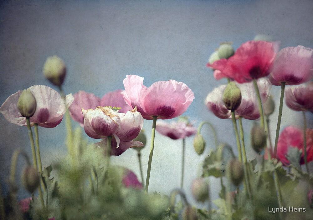 ~ Painted Ladies ~ by Lynda Heins