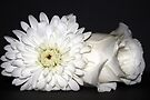 White Flowers by RebeccaBlackman