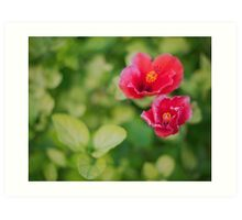 Hibiscus in a 50 mm' bokeh Art Print
