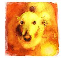 Doggie double Photographic Print