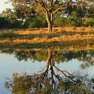 Silhouetted tree on the savuti channel by jozi1