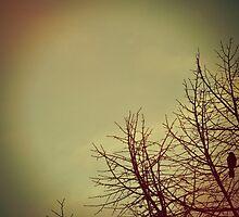 Black wings by KisaSunrise