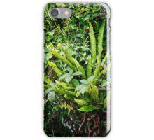 A Bird's Nest Fern iPhone Case/Skin