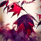 Fall Light by Stacey Debono
