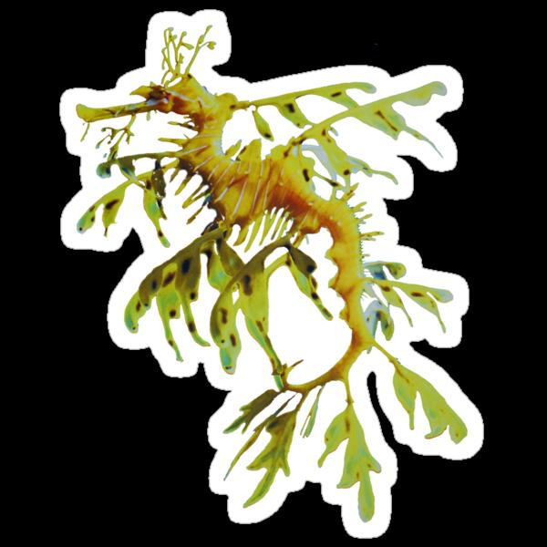 Leafy Sea Dragon by Dive Seven .