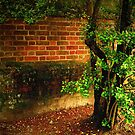 Sun On An Old Brick Wall by Roger Sampson