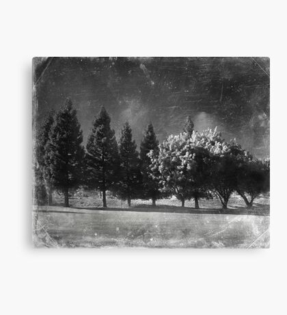 Can't Help But Shine Canvas Print