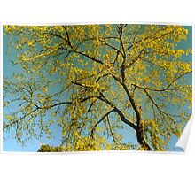 Golden Autumn Tree Poster