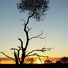 Sunset in the bush by pnjmcc