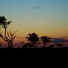 Sunset in the Bush IV by pnjmcc