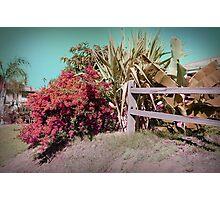 Autumn In Chula Vista Photographic Print