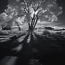 Cottonwood Shadows, Part II by Clayhaus