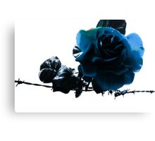 Blue Rose on Barb Wire Canvas Print