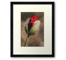 Birth of a Poppy Framed Print