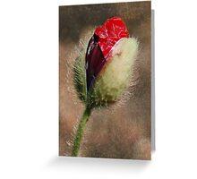 Birth of a Poppy Greeting Card