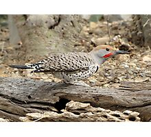 Gilded Flicker ~ Male Photographic Print