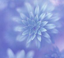 Gentle Emergence by Emma Sterling
