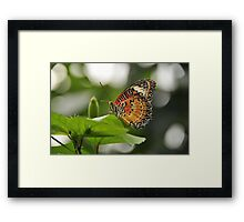 Leopard Lace Wing Framed Print