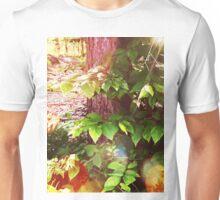 Woodland Mystics in Maine: Boothbay Unisex T-Shirt
