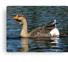 African Goose ~ Female Canvas Print