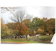 Autumn in Bredicot lane Poster