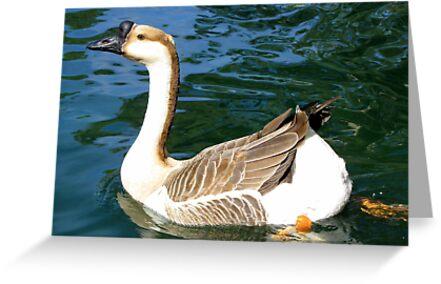 Chinese Goose ~ Male by Kimberly Chadwick