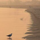 Misty Morning on Busselton Beach by Eve Parry